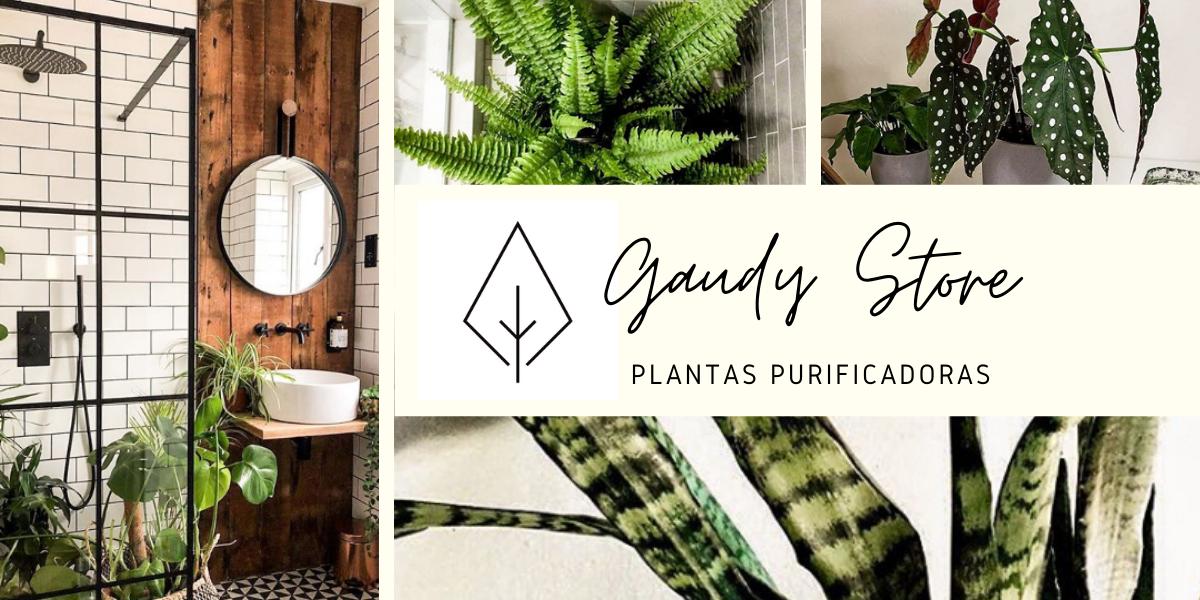 GAUDY - PLANTAS PURIFICADORAS