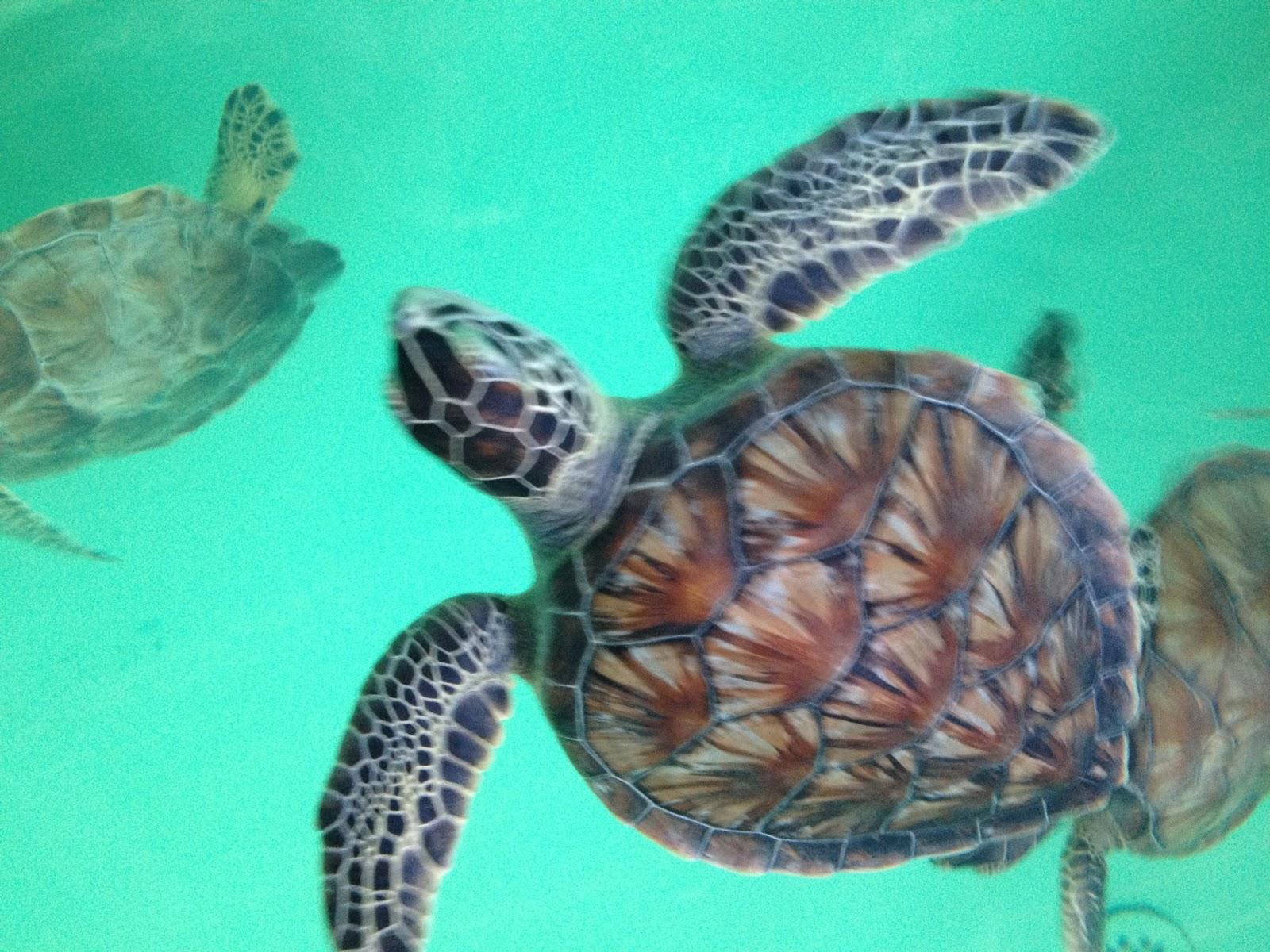 South Padre Island Sea Turtle Jobs
