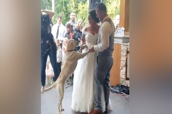 Wedding Event Pair Caught Off Guard When Pet Dog Suddenly Signs Up With first Dancing
