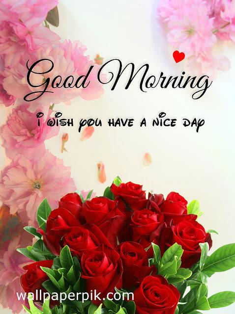 rose gulab flower phool wali good morning wish image