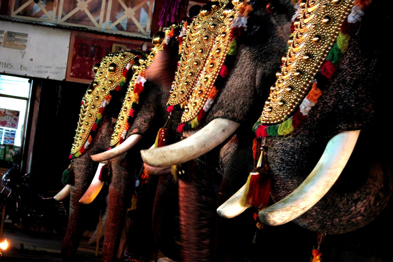 Elephant Parade From A Temple Festival Of Kerala