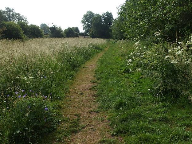Chippenham's unmown Donkey Field