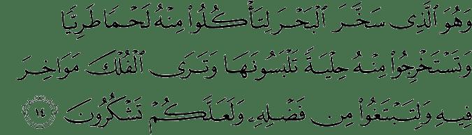 Surat An Nahl Ayat 14
