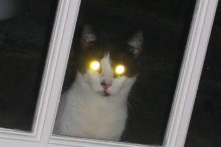 ¿Cómo ven los gatos de noche?