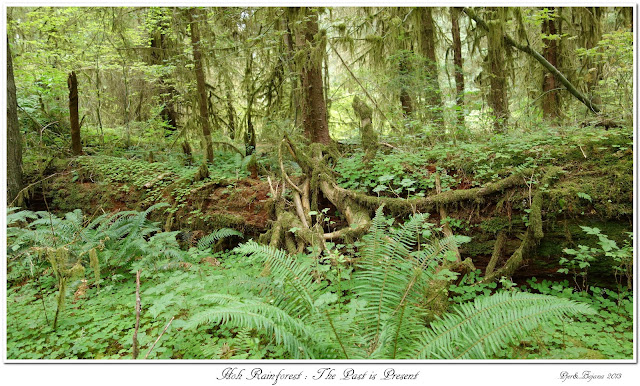 Hoh Rainforest: The Past is Present