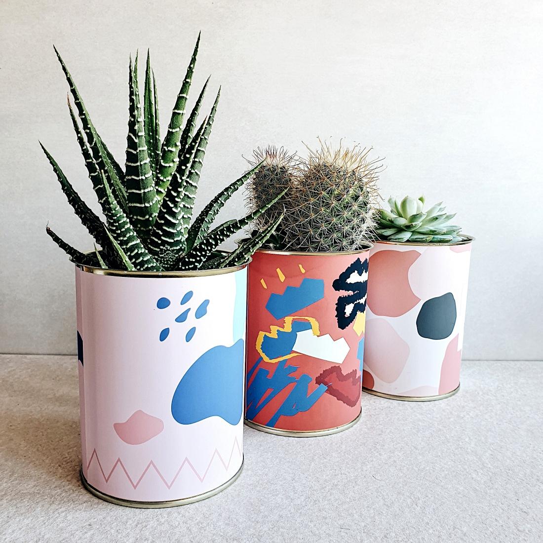 Cactus personalizados