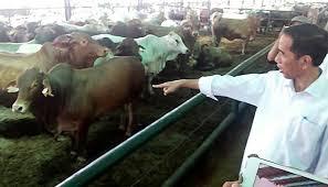 Dua Tahun Jokowi-JK, Indonesia Impor 400 Ribu Sapi dari Meksiko