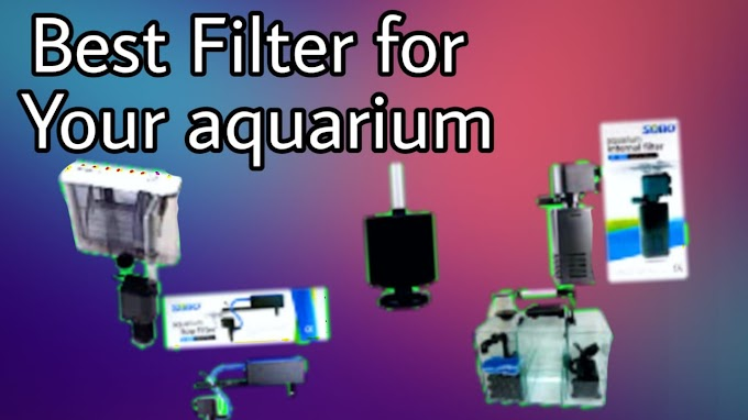 Best Filter for your fish tank