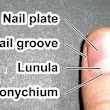 What that tells you your nails?