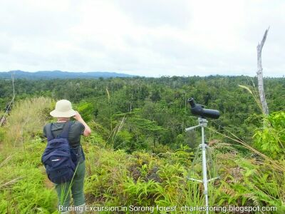 Birding tour with an Australian lady in Sorong Ridge Forest of Indonesia