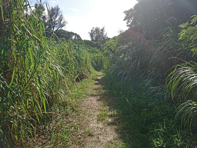 シムクガマの小道の写真