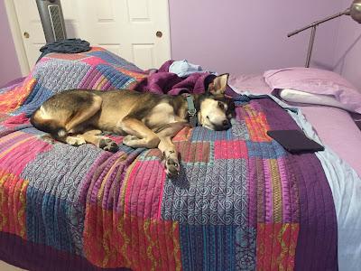 Large dog flopped on bed