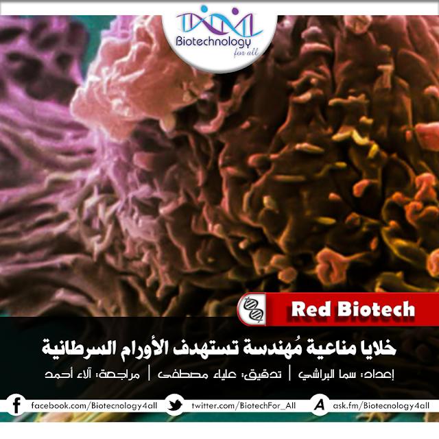 خلايا مناعيّة مُهَندَسَةٌ جينيًّا لتستهدِفَ الأورام السّرطانيّة