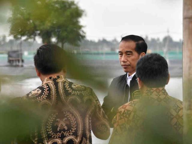 Jokowi Bersama Petambak Perhutanan Sosial Panen Udang di Muara Gembong