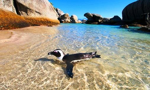 5 أماكن سياحية يجب عليك زيارتها في جنوب افريقيا