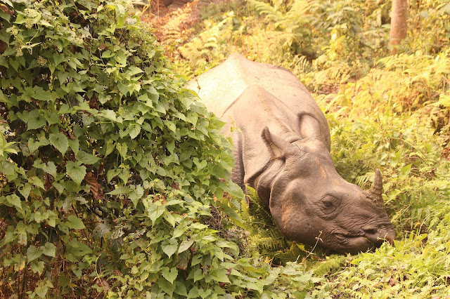 Rhino Watching in Chitwan National Park