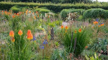 Plantas sudafricanas en el South African Meadow de los jardines de Wisley