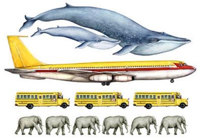 الحوت الازرق |  معلومات عن الحوت الازرق