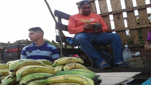 Sin tostones ni tajadas: hongo amenaza cultivos de plátano en Zulia
