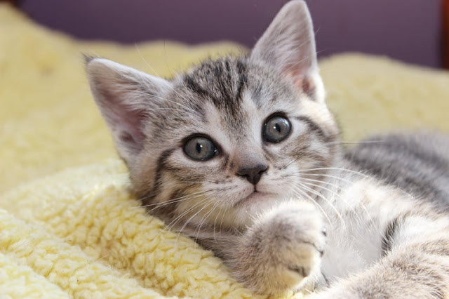 Mačke OSEĆAJU BOLEST VLASNIKA: Ako nanjuši temperaturu ili nešto teže, MAČKA ĆE URADITI OVO!