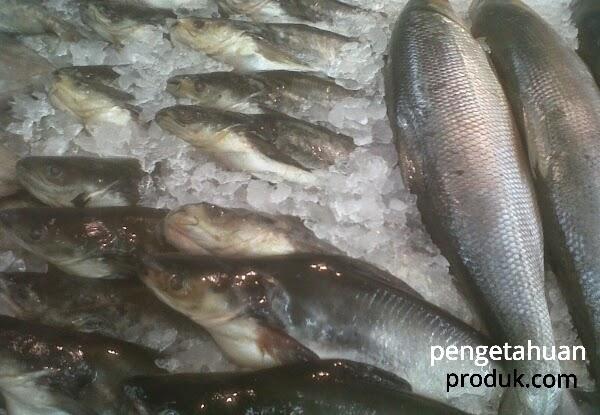 Cara Paling Sederhana Mengetahui Ciri Ikan Yang Benar Segar