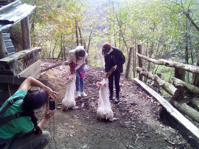 mi hija y su amiga dando un biberón a los cerdos