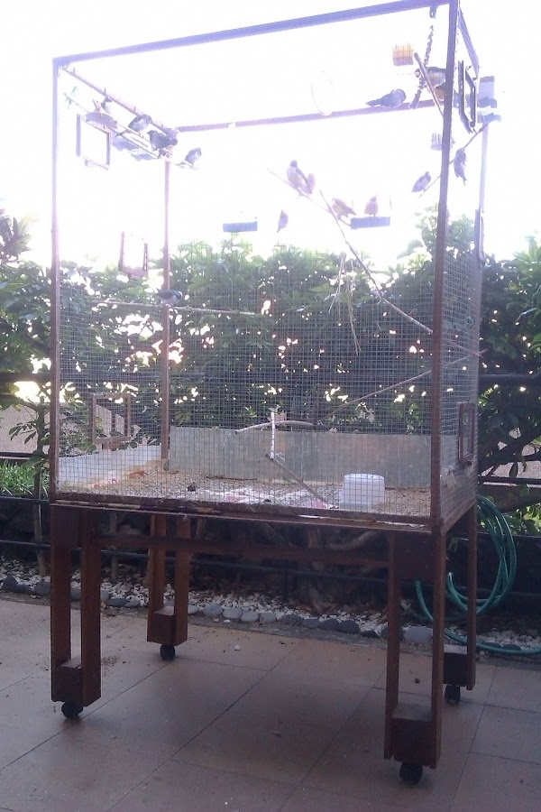 Jaula de Pájaros con Palets