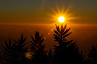 Sun Rays - Photo by mugi jo on Unsplash
