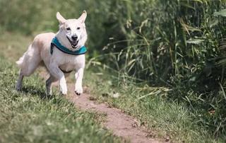Cara Menghindari Gigitan Anjing Galak