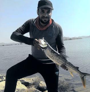 الكاستنج في المياه العذبة (بحيرة ناصر)