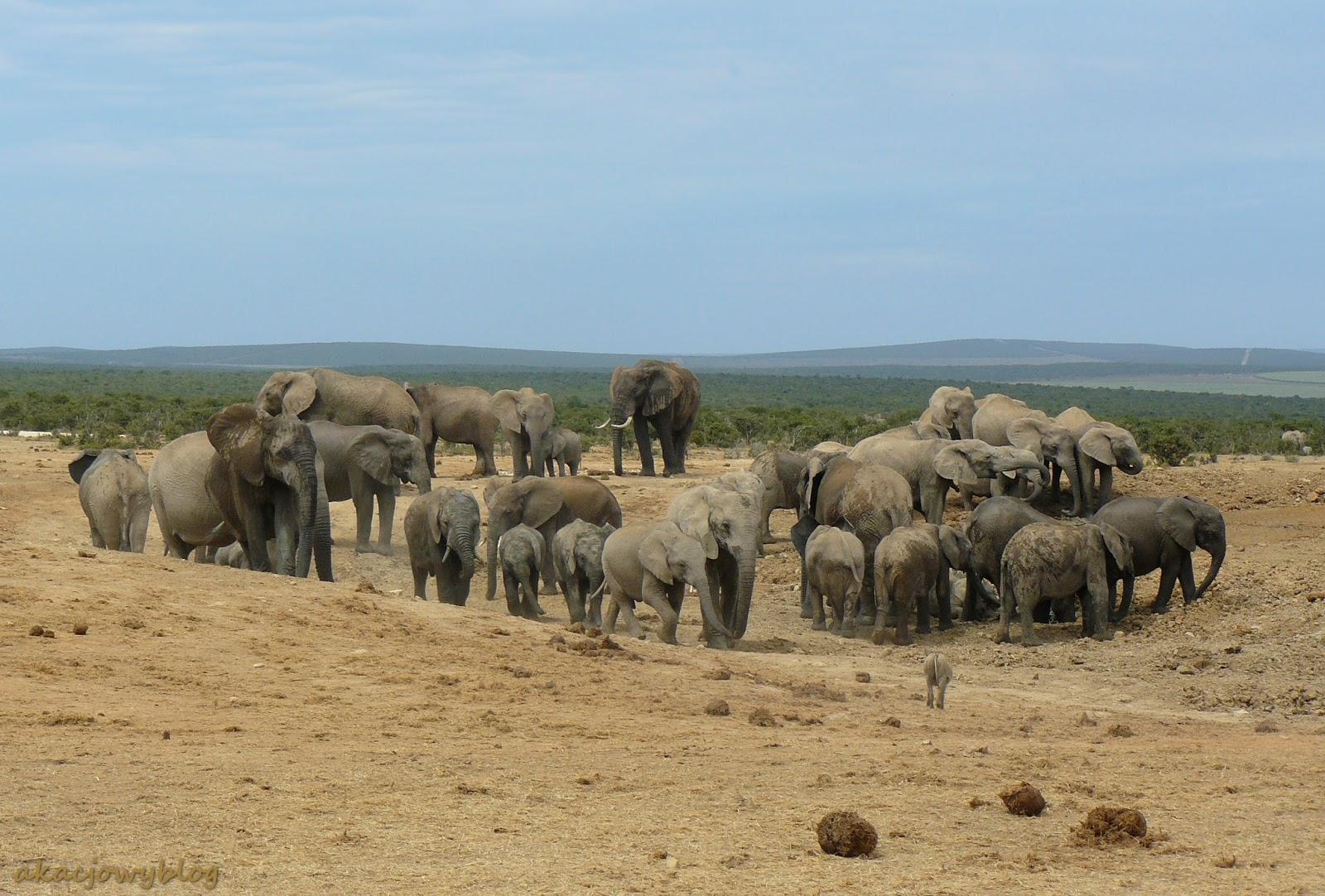 Park Narodowy Addo w RPA.