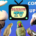 Parrot TV for Birds | CONTENT UPDATE!