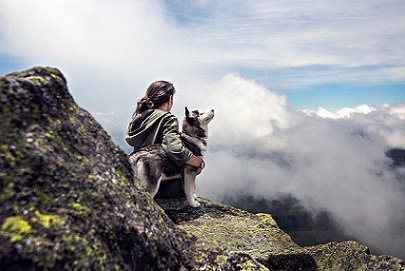 Husky en la montaña