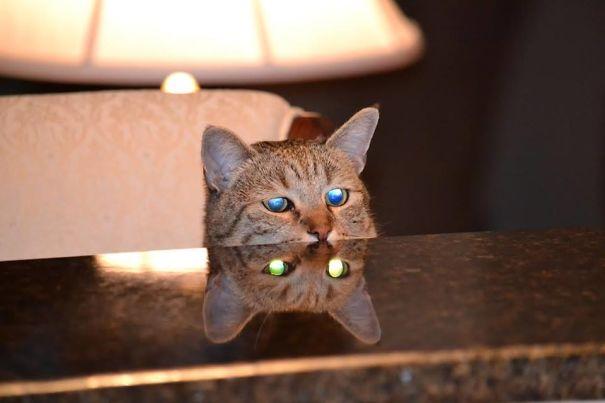 Kira Kira Kalo Kucingnya Begini,Masih Ada Yang Pengen Pelihara Nggak?