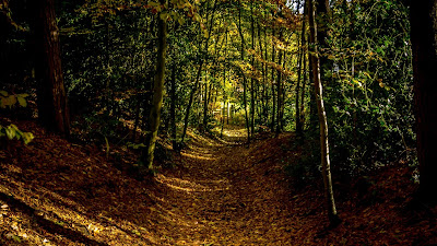 Autumn, forest, path, trees, leaves