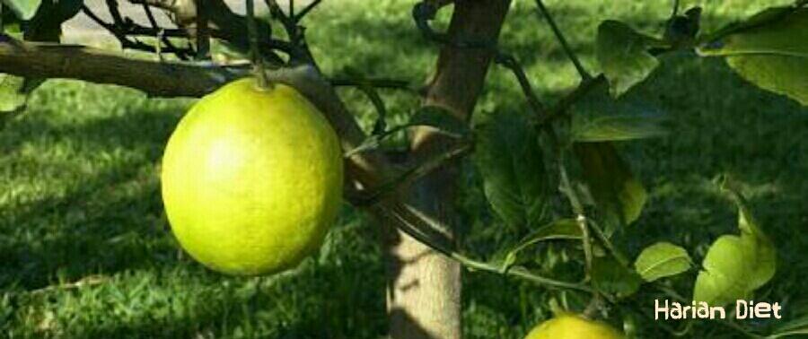 Cara Mengecilkan Perut Buncit Dengan Jeruk Nipis