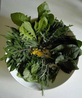 Maggio nell'orto biologico: raccolto di erbe