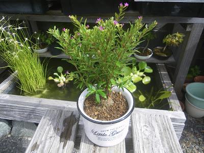 小さな鉢植え