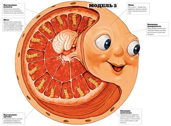 Как устроен Колобок? Научно-околонаучные гипотезы. http://prazdnichnymir.ru/