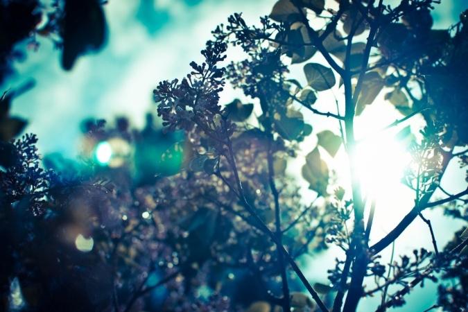 jaro, kvetoucí šeřík, větev