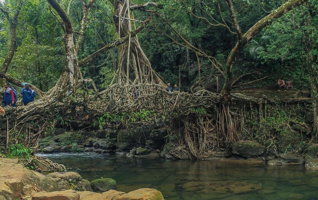 The Wonderful Living Root Bridges of Meghalaya, India