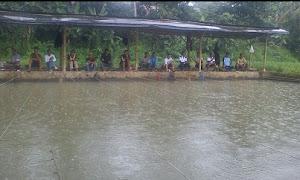 Ramuan Umpan Mancing Ikan Mas Cuaca Hujan
