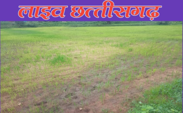 sukha khet,live chhattisgarh news