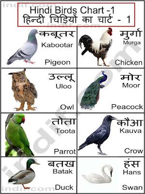 Birds Name
