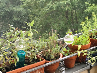 Pflanzen im Regen, Gießkugeln und Eiffelturmminiatur