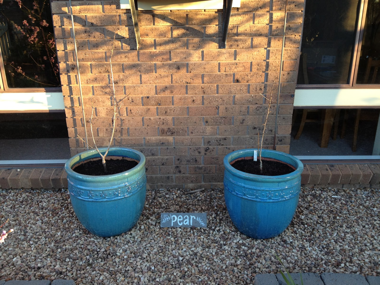 Spring Seedlings and Planting - The Greening of Gavin