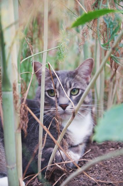 cats, gardens, Jayme Marie Henderson
