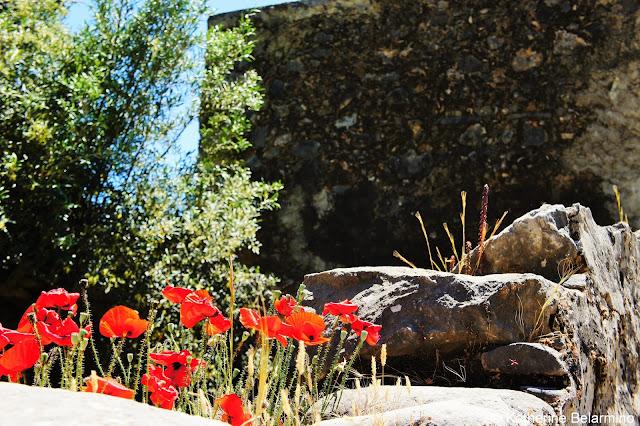 Red Anemones Samaria Gorge Hike Crete Greece