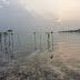 Catatan Tercecer dari Pulau Pari: Keheningan Pantai Pasir Perawan