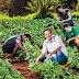 Valorizar a agricultura familiar é promover o desenvolvimento social